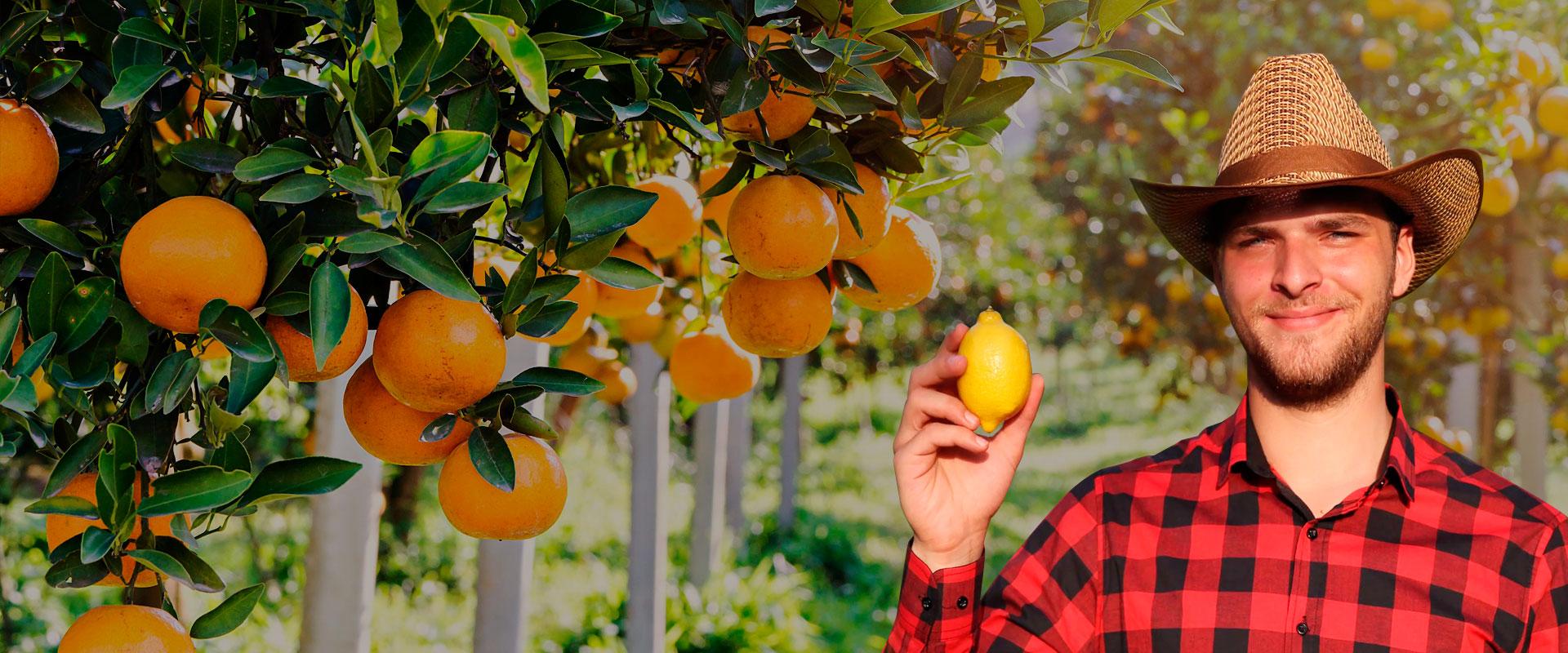 Compra-citricos-a-proovedores-Alicante